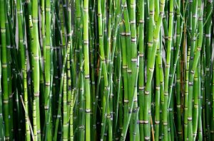 Life Lessons from a Chinese bamboo farmer — Akidwa